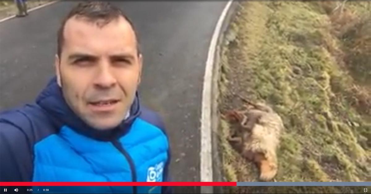 Que el Alcalde de Cangas de Onís deje de pedir que maten a los lobos