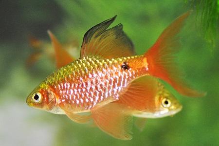 JOES AQUAWORLD FOR EXOTIC FISHES MUMBAI INDIA 9833898901: January ...