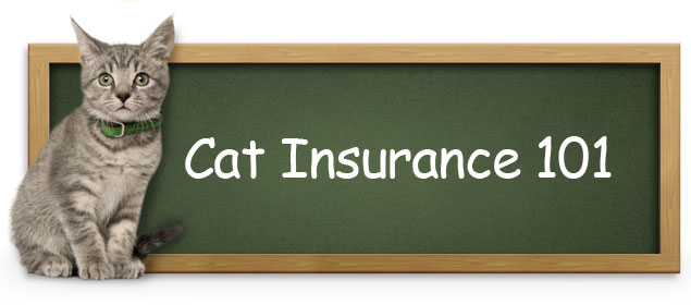 cat, Cats, Insurance for Cat, pet, pets,