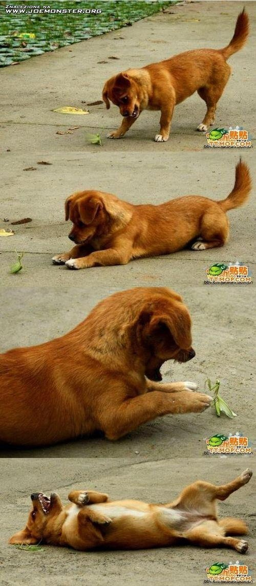 Puppy Makes a New Friend funny pic