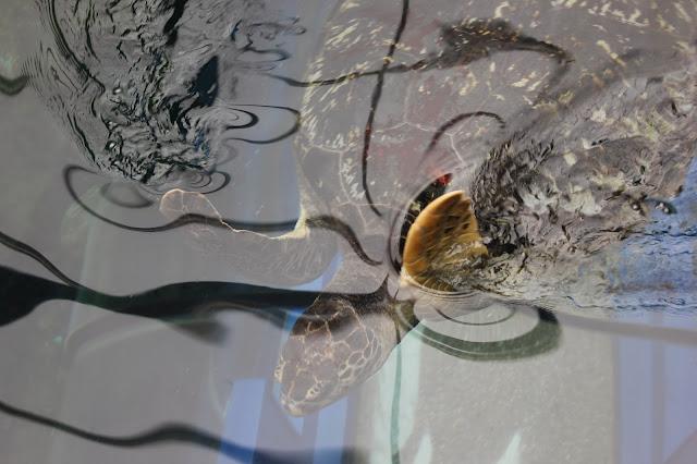georgina-minter-brown-georgie-frequencies-holiday-bournemouth-birthday-trip-sea-coast-ocean-oceanarium-aquarium-turtle