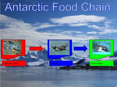 Aaron antarctic food chain for Antarctic cuisine