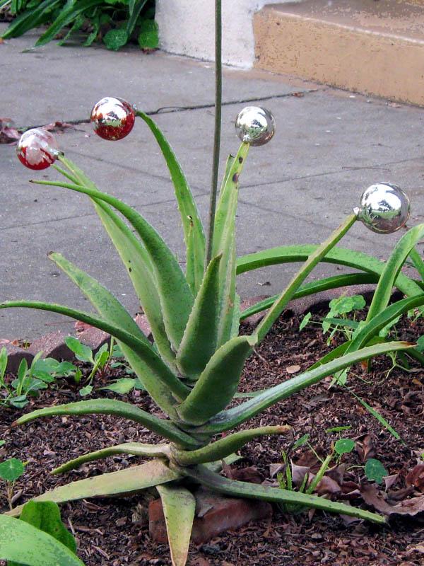 Cactus with Christmas Balls