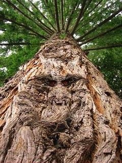 Foto Pohon Paling Aneh dan Unik