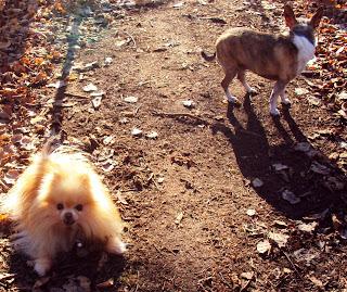 ottawa valley dog whisperer does your puppy or dog