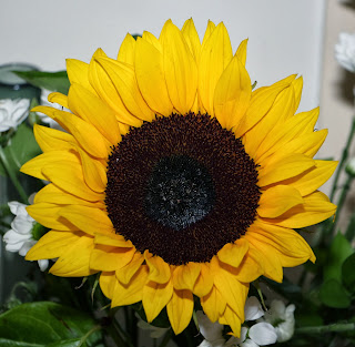African Sunflower for Madiba - RIP Nelson Mandela 18 July 1918 - 5 December 2013