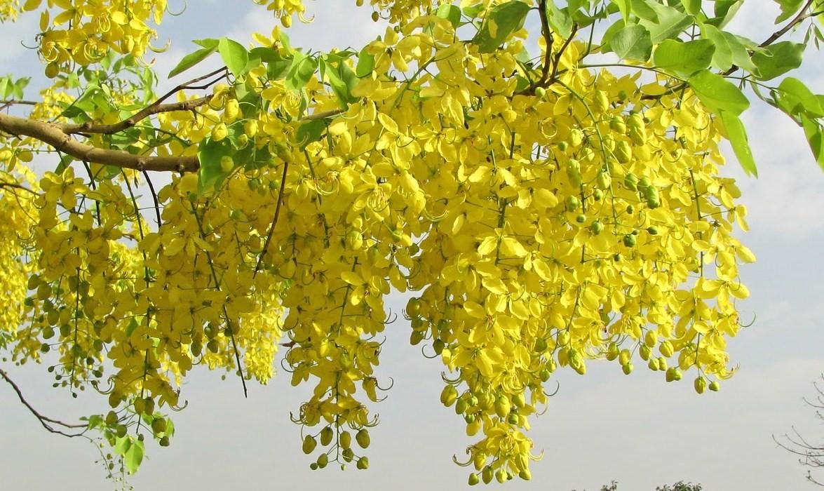 A Blog Of Scenic Nature Beautiful Creations Of God Vibgyor