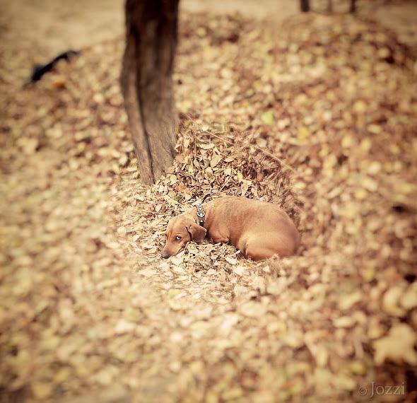 Осенняя собачонка