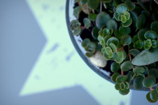 sukkulenten, succulents, pflanze, plant, grün, green, summer, aloe vera, aloe, tipps, gärtnern, garten, gardening, garden, propagation, lifestyleblog, blogger, xenobiophilia