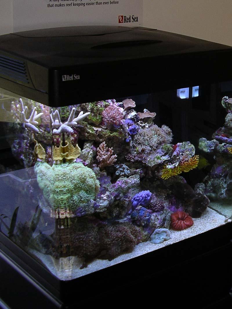 l aquarium r 233 cifal faut il qu un aquarium soit ouvert ou ferm 233