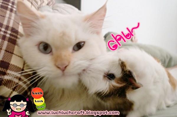 cat love guinea pig
