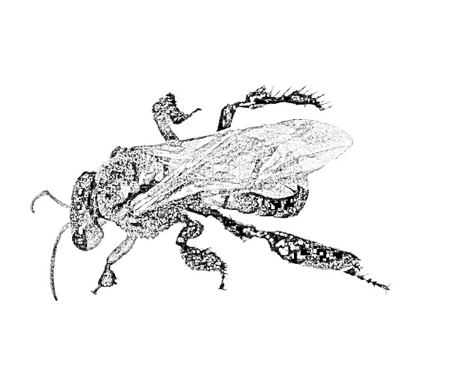 sketch of a bee