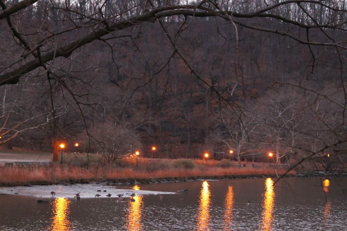 Chrsitmas Eve Park Lights