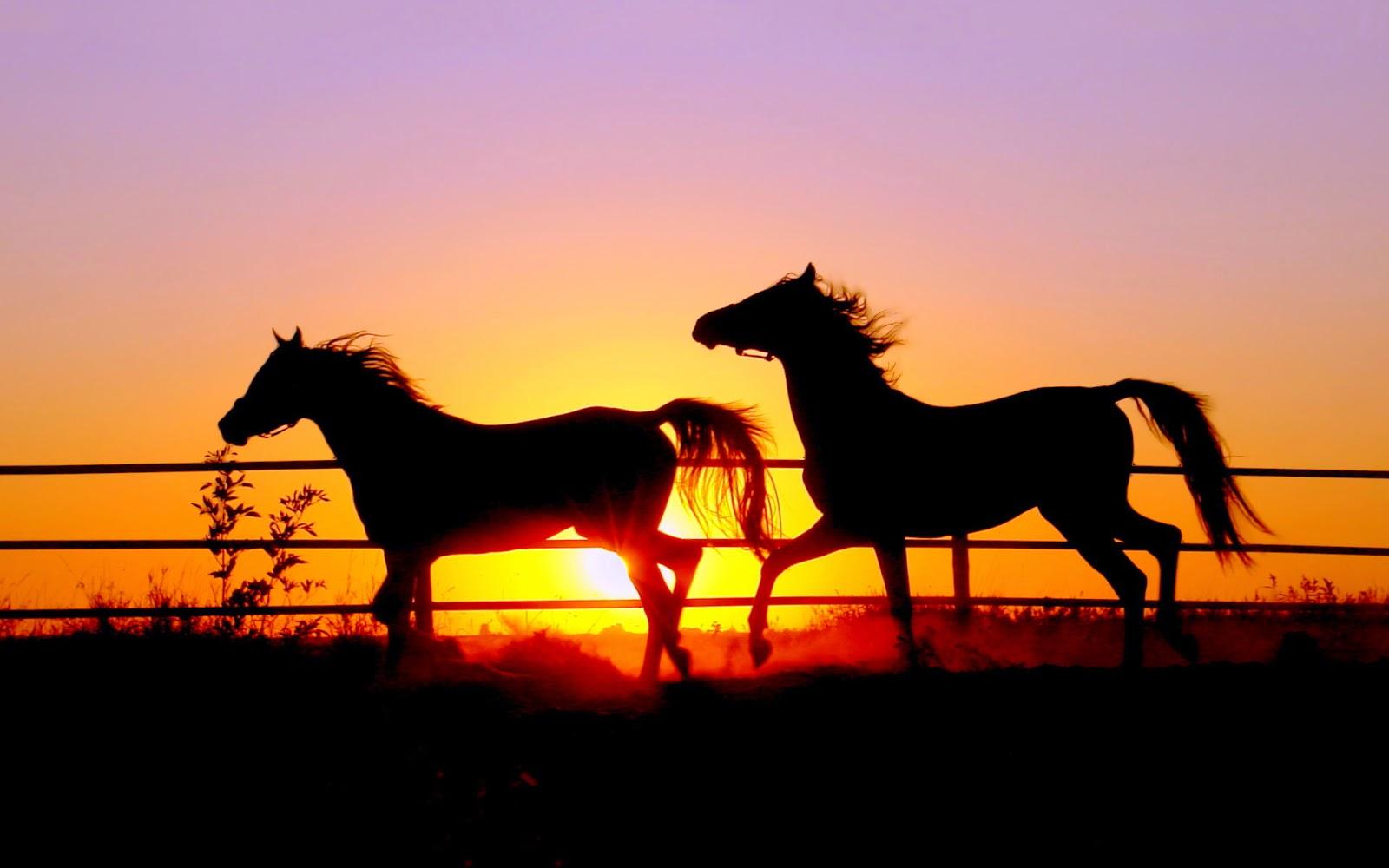 Papel de Parede Animal Cavalos, animal wallpaper hd image free