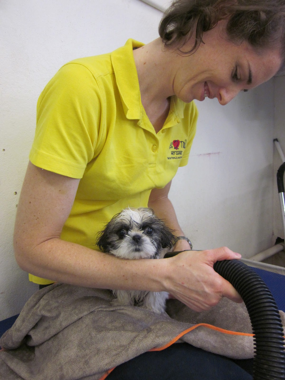nose 2 tail pet care latest news july 2012