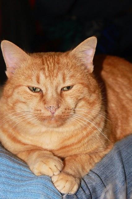 Kucing Kedai Makan Rezeki Apa Kaitan Perlutahu