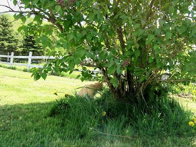 cat in a bush
