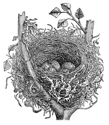 Stock Images  Vintage Nest Natural History