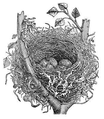 Фото фонда Vintage Nest Natural History