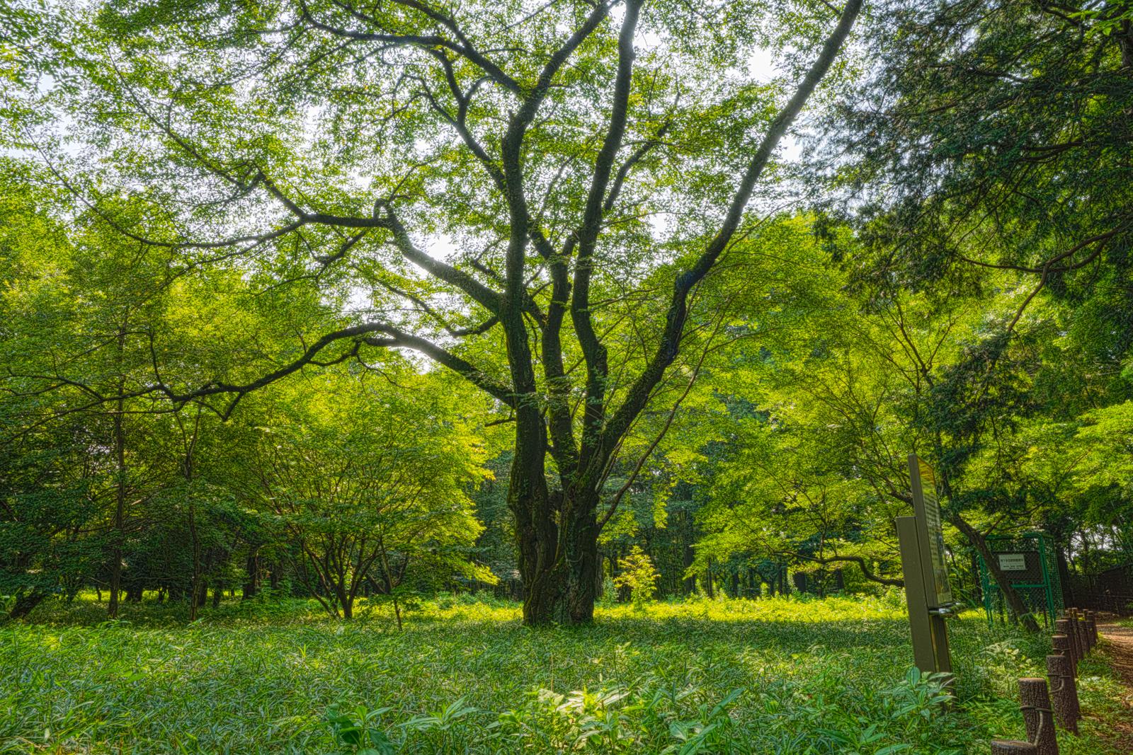 野鳥の森の写真