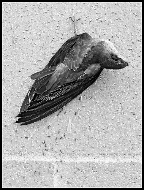 Dead; Death; Bird; Future Fossils; Decay