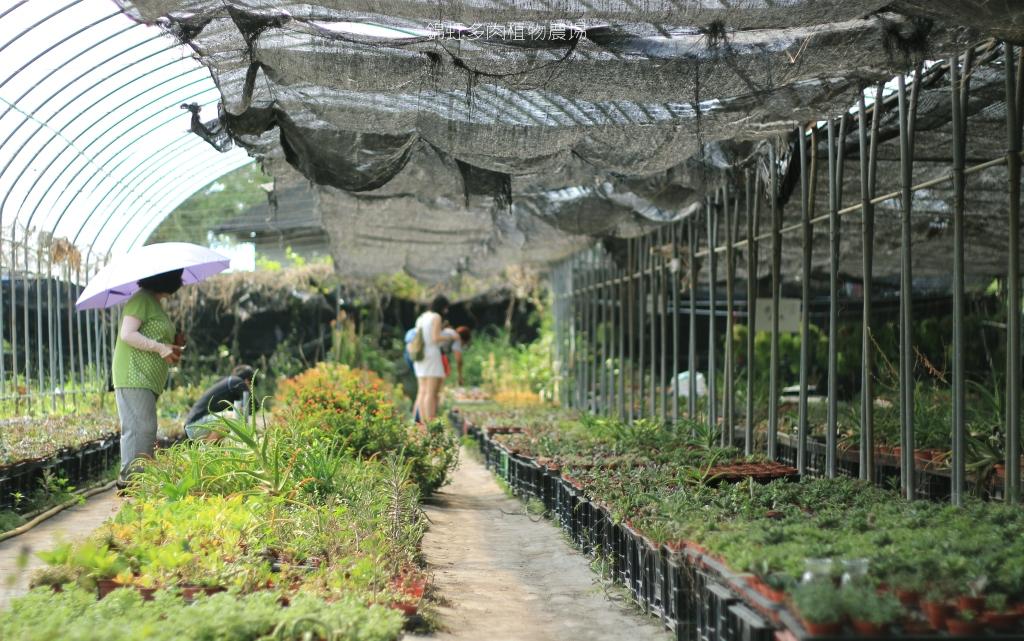 南投埔里景點,錦虹多肉植物農場-21