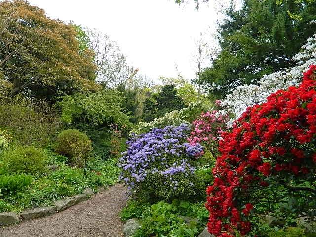 W krainie rododendronów