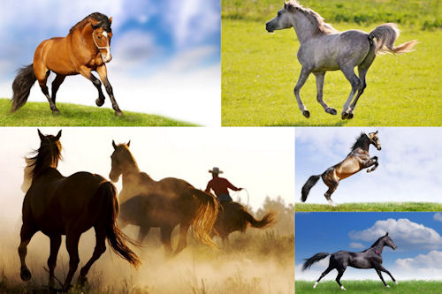 Fotografías de caballos VII (Equinos de Pura Sangre)