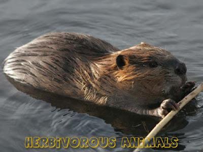 List Of Herbivorous Animals