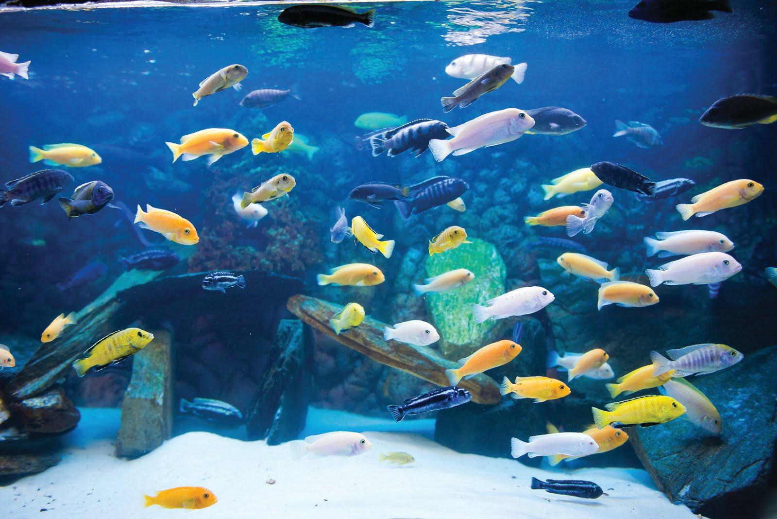 Stylowe Akwarium Blog Zookarina