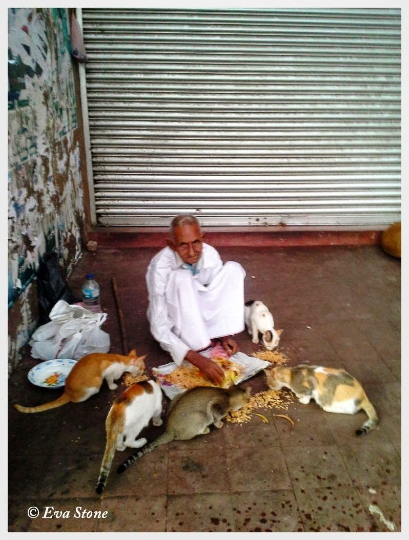 Eva Stone photo, generous man, generosity, feeding stray cats, Colombo