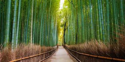 terowongan bambu