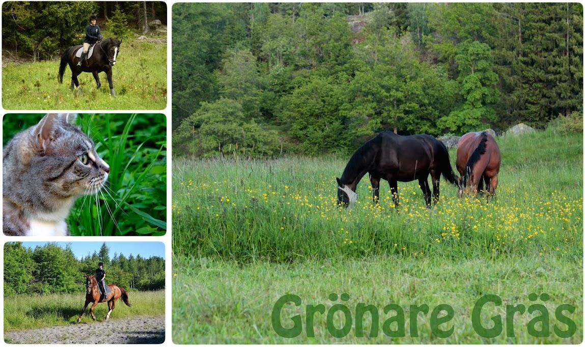 GronareGras