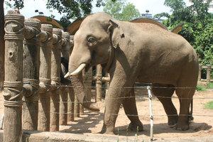 Thảo Cầm Viên công viên vườn thú