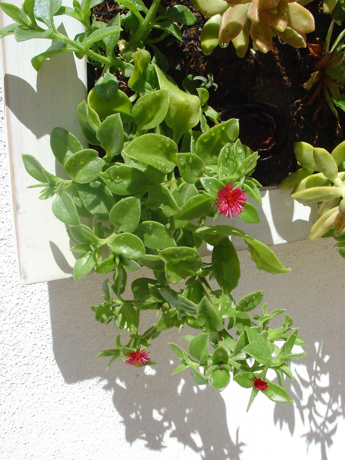 jardim vertical de suculentas:Novidades do Jardim Vertical de Suculentas