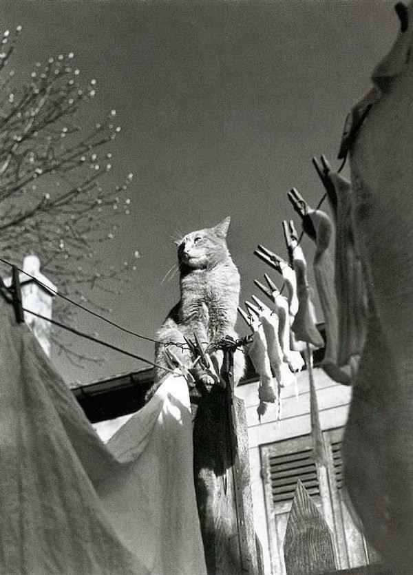 chats de paris photo