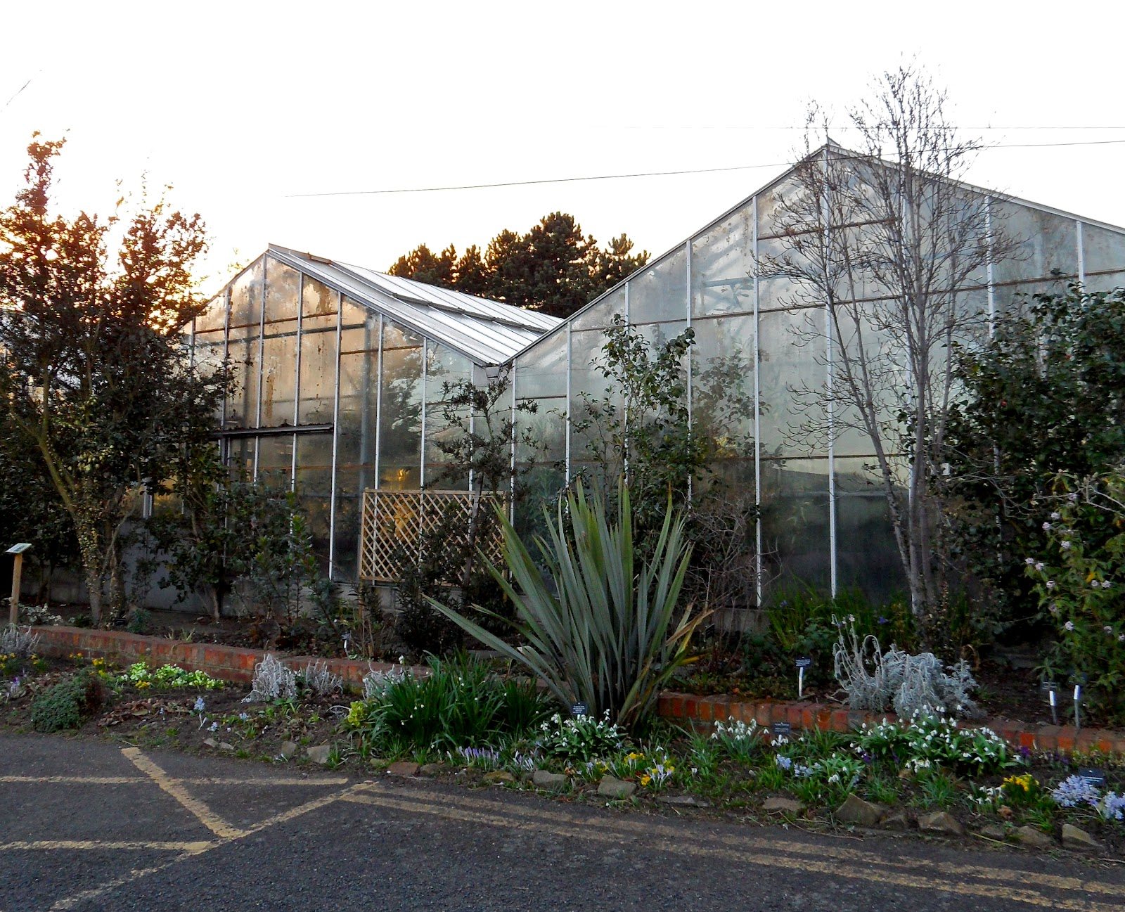 nick bastow why doesn u0027t newcastle have a botanical winter garden