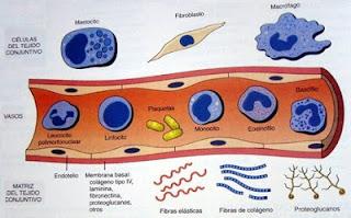 Inflamación y reparación parte II