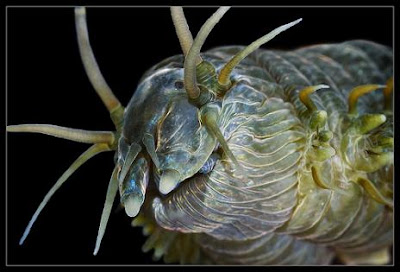 15 Amazing Creatures from Russia's White Sea Shot in Macro Seen On www.coolpicturegallery.us