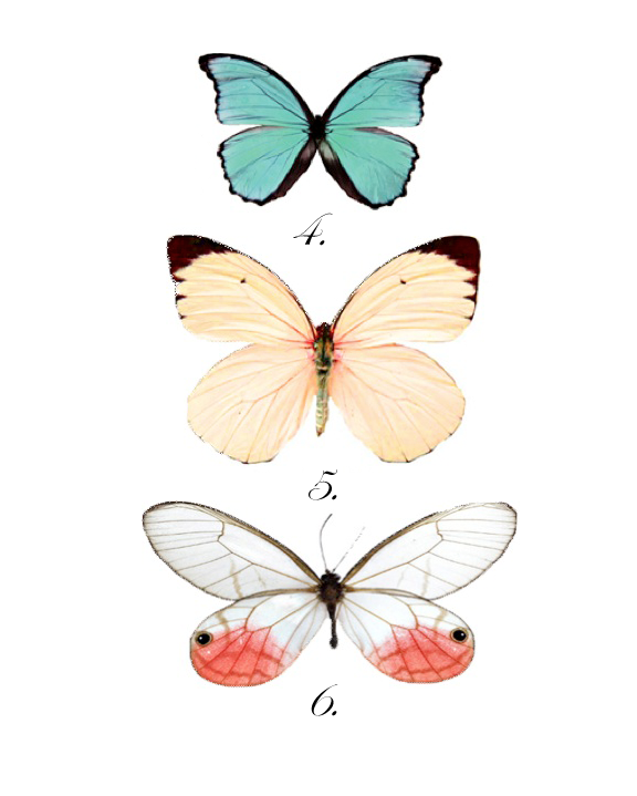 Modest image regarding printable butterfly pictures