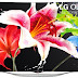 H LG παρουσίασε μια νέα οικονομική OLED τηλεόραση 55 ιντσών