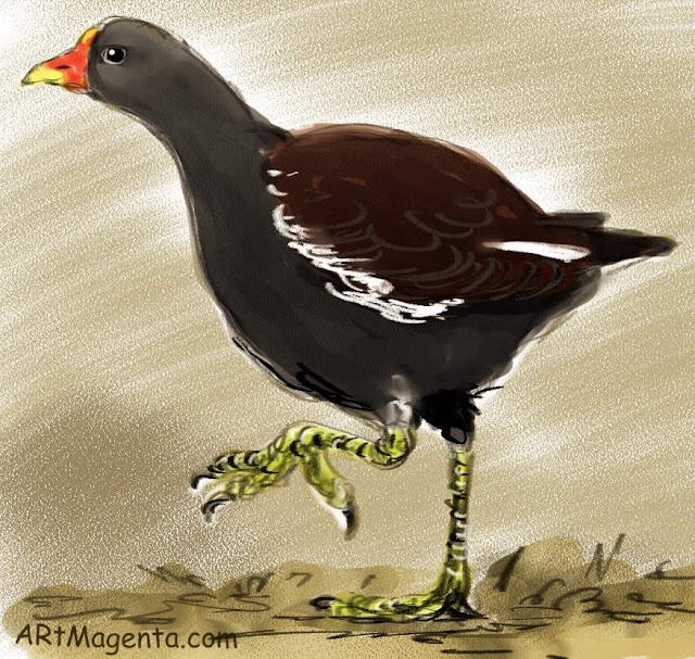 Moorhen is a bird sketh by artist and illustrator Artmagenta.