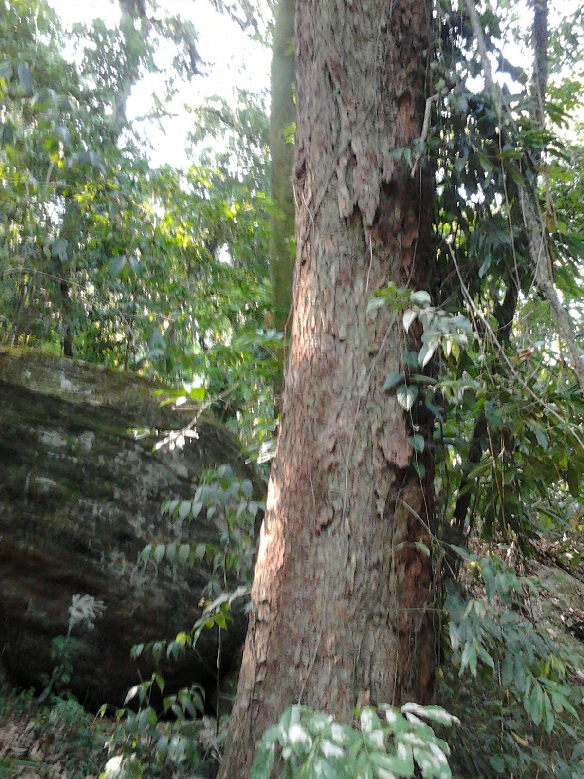 Árvores para salvar o Planeta