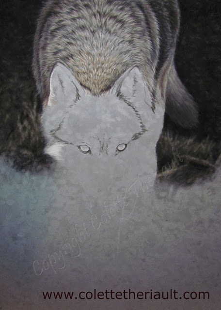 Wolf Painting in progress by Canadian Wildlife Artist Colette Theriault