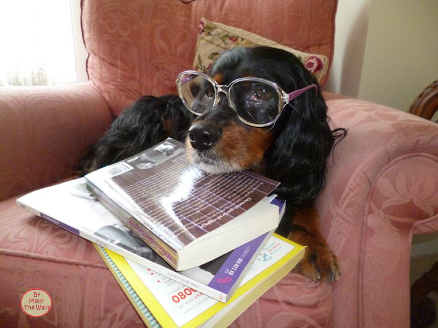Molly The Wally Has A Read!