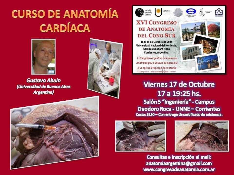 Curso Anatomia Cardiaca