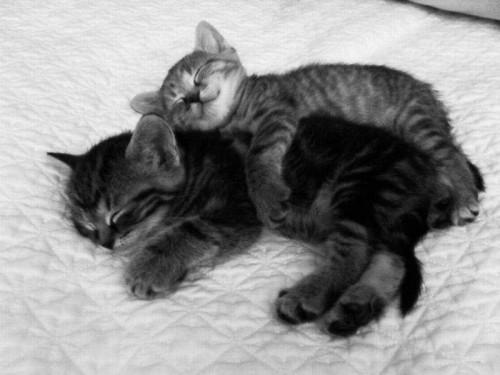 Gatitos dormidos abrazados - Imagui