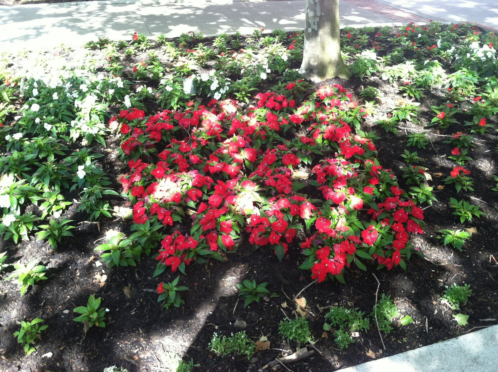 Beautiful flower beds pictures beautiful flowers for Flowers for flower beds