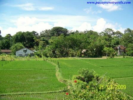 Hotel Saren Indah en Ubud