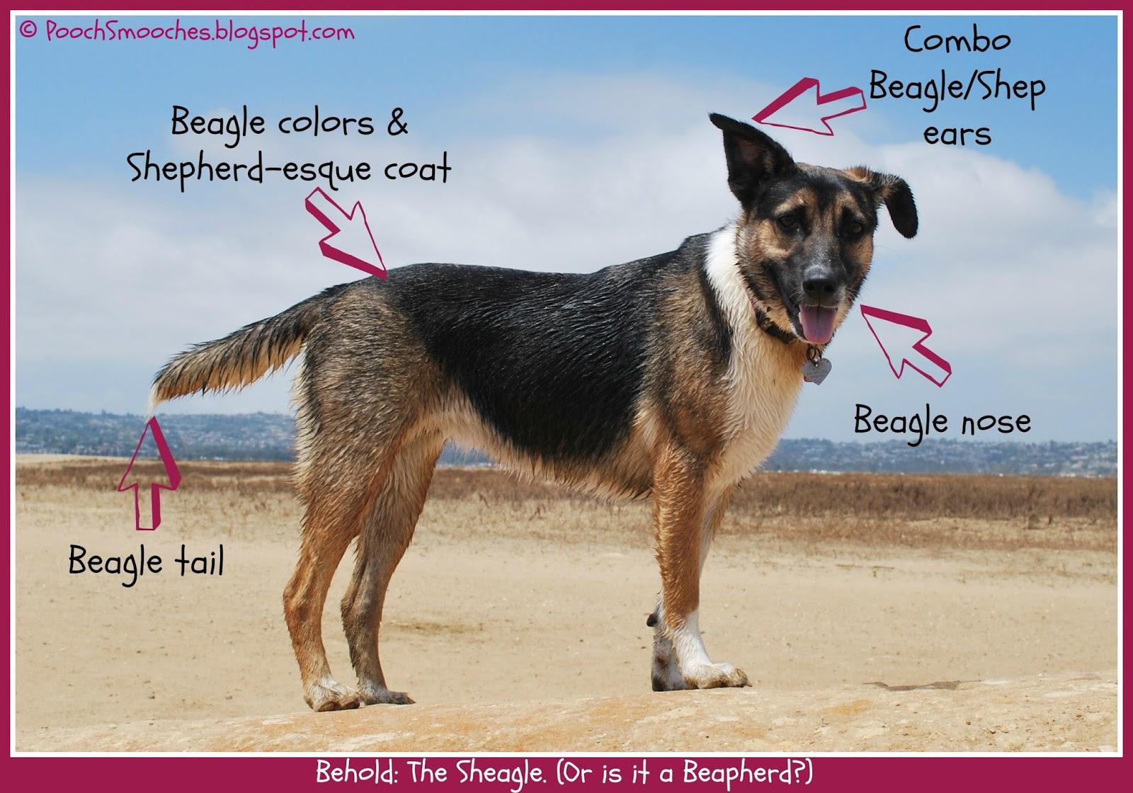 Mixed Breed Dog Identify